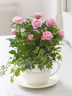 Charming Hanging Plants ideas to Brighten Your Patio – Gardening Decor Beautiful Rose Photos, Beautiful Roses, Beautiful Flowers, Beautiful Park, Hanging Plants, Indoor Plants, Coffee Grounds For Plants, Teacup Plants, Mini Roses