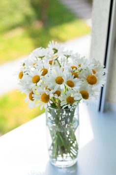 Pick the Best Flowers for Your Apartment - Renter Resources
