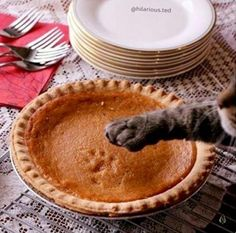 PetsLady's Pick: Funny Pie-Printing Cat Of The Day...see more at PetsLady.com -The FUN site for Animal Lovers