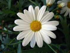 "In the poem  ""To the Daisy ('With Little Here') Wordsworth is discussing the greater significance the daisy is to man kind then the material world could ever be. Throughout the poem he is referring…"