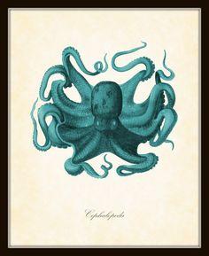 Vintage Octopus Aqua Natural History Art Print 8 x 10. $10.00, via Etsy.