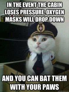 If you are traveling with a kitten, be sure to play with your own mask before helping them play with theirs.