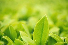 closeup green leaf in garden under sunlight natural green plants as