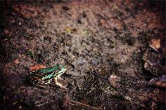 frog animal mud -  frog animal mud free stock photo Dimensions:2509 x 1673 Size:0.80 MB  - http://www.welovesolo.com/frog-animal-mud/
