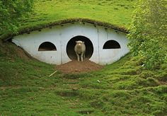 """Aww. The Shire set from the """"Lord of the Rings"""" movies is now a home for sheep."""