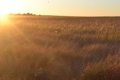 L1M2AP2: wind blowing through long grass at sunset. tripod. slower shutter speed f/25 1/155s ISO 200 @22mm