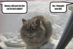 If this was my cat he'd be swearing up a storm in kitty language