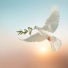 Dove Pictures, Pictures Of Christ, Art Pictures, Good Morning Picture, Morning Pictures, Jesus Art, Jesus Christ, Peace Poster, Black Background Photography