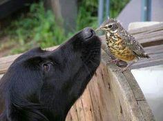 Bellos amigos!!!