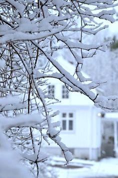 Just a peek through a snowy branch.