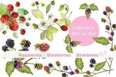 Berries watercolor Clip art by WatercolorArt on @creativemarket