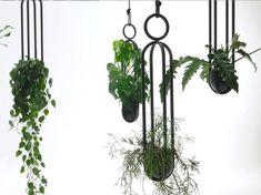 Urban Jungle: Interior-Profis hängen jetzt ihre Pflanzen auf