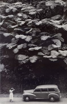 """Photograph by Charles Allmon. From """"Martinique: A Tropical Bit of France,"""" National Geographic, February, """"Towering Tree Ferns Spread a Lacy Canopy Above a Martinique Hillside These Black White Photos, Black And White Photography, National Geographic, Vintage Photography, Art Photography, Landscape Arquitecture, Eugenia Loli, Foto Poster, Big Leaves"""