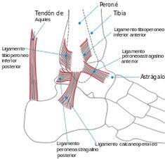 Blog Auxiliar de Enfermería sgc: Cómo evitar las lesiones deportivas