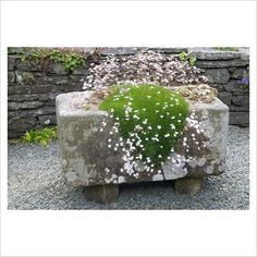 Gypsophila tenuifolia in large stone trough rock garden: Photo: Fiona Lea