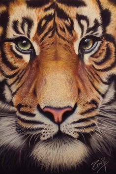 Tiger by TinaGuerrisi on DeviantArt Tiger Artwork, Tiger Painting, Baby Painting, Disney Canvas Art, Lion Photography, Baby Animal Drawings, Tiger Drawing, Nature Illustration, Cool Art Drawings