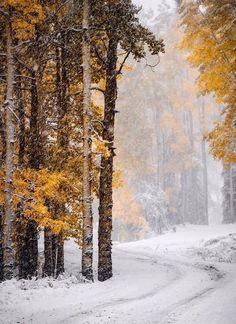 #winter #snow #зима #снег #ель #первый_снег #amazing #beautiful #beautifulpictures #earth #nature #природа #мирпрекрасен #мир_необычного #красота #красивый_пейзаж #awesome #landscapephotography #landscape