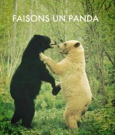 Faisons un panda. #drole #photo // www.drolementvotre.com