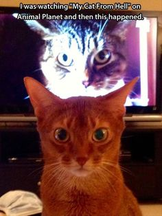 lmao!! my cats Always watch the tv with me whenever I watch My Cat From Hell