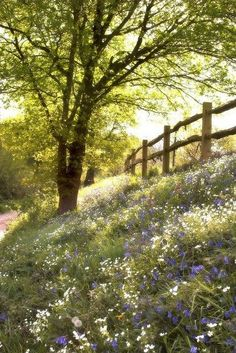 Trees + sunlight + grass + wildflowers + old wooden fence = happiness!
