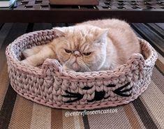 Gatos dormiam em caixas porque não conheciam os cestos da Entre Fios e Encantos! né @nyanogato Deslize para ver mais fotos Seu Pet…