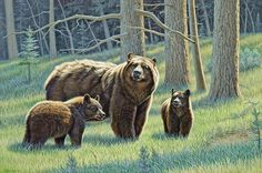 The Family - Black Bears Art Print by Paul Krapf. All prints are professionally printed, packaged, and shipped within 3 - 4 business days. Choose from multiple sizes and hundreds of frame and mat options. Bear Paintings, Wildlife Paintings, Paintings I Love, Wildlife Art, Oil Paintings, Black Bear, Brown Bear, Bear Drawing, Bear Art