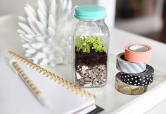 Use an old salt shaker to make this small terrarium.