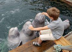 Em geral a maior parte dos golfinhos que vivem em aquários de hotéis, são golfinhos que foram bem ensinado