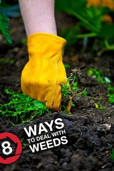 Garden Weeds: Gardening Tips and Weed Control Advice from Troy-Bilt