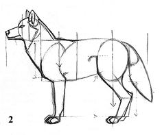 HOW TO DRAW A GRAY WOLF  by J. C. Amberlyn