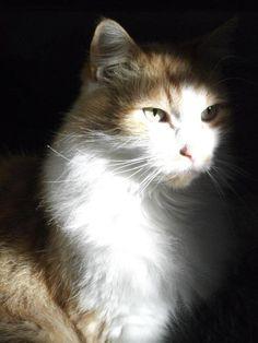 ラブリー-KittyCats、melleelovesyou:Bynx