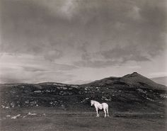 White Horse, South Uist, Scotland, by Paul Strand 1954    http://www.flickriver.com/photos/photo-tractatus/sets/72157626569342547/