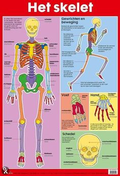 Poster lichaam