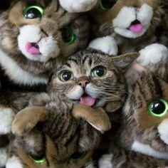 Awww! Bub the cat!