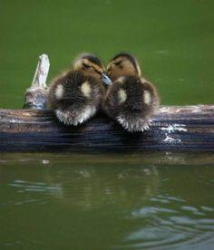 Cute Adorable Animal Photos