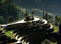 Rice terraces.. Absolutely beautiful..