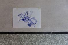 Aracelly Scheper, Kerstorchidee, nationale bloem van Colombia Foto Bas Boerman coderood.co