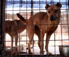 Moran Market is South Korea's largest dog meat market is shutting down. It supplies one third of all the dog meat consumed in the country, selling an estimated 80,000 dogs—dead or alive—each year.