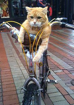 自転車に乗るいろんな動物たちがめちゃかわいいwwwwwww:ハムスター速報    (via http://hamusoku.com/archives/7184703.html )