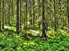 Märchenwald ... Nationalpark Nordschwarzwald, bei Baden-Baden http://www.hotel-am-sophienpark.de/