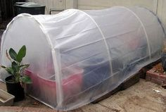 Picture of Build an Easy 5 X 5 Home Greenhouse for Under $25