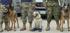 Perros Rescatistas Mexicanos.  En medio está Frida.