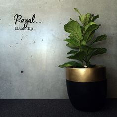 Awesome light pot for indoor or undercover outdoor.