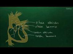 Verenkierto (yläkoulu) - YouTube