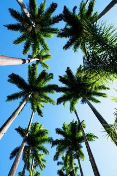 bright blue sunny skies and happy palm trees of LA.