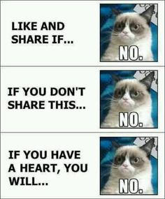 YES YES YES!!!!!!! I love you Grumpy Cat