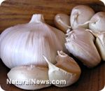Garlic more effective than antibiotics against food poisoning bacteria