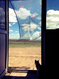 夏の終わりに見ると切ない写真集 Cat in Japan Cat Window, I Love Cats, Cat Art, Illustrations Posters, Photo Art, Fantasy Art, Images, Scenery, Scrap