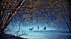 deer for hunting in a nice peaceful forst :D