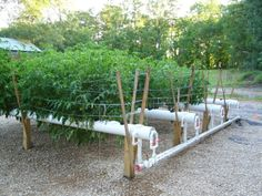 Hydroponics Growing Systems